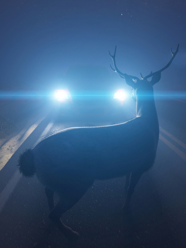6 Points to Help Drivers Steer Clear of Crossing Deer this November 15th - Michigan Human Resources Blog - Sage Solutions Group - deer_in_headlights